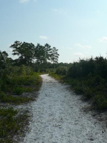 Trail through scrub