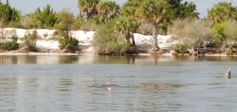Dolphin dorsal fin