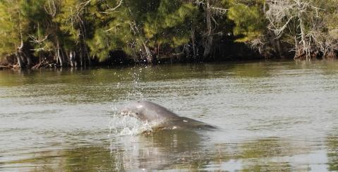 Dolphin(s)?