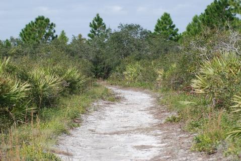 Scrub Ridge Trail