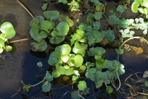 Assorted aquatic plants