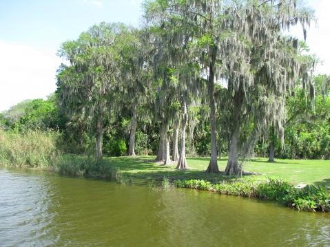 Cypress trees along shoreline