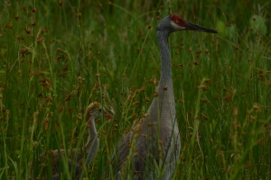 We kept a close but respectable distance as we watched them disappear deep into the tall grass.